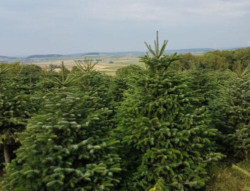Weihnachtsbäume Großhandel Dänemark – die bessere Alternative